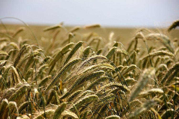https://www.ragusanews.com//immagini_articoli/19-11-2019/dieta-dei-cereali-per-perdere-peso-500.jpg