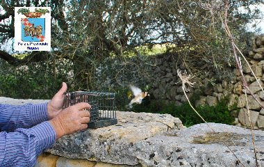 https://www.ragusanews.com//immagini_articoli/19-12-2018/cacciatori-maltesi-catturano-uccelli-ragusa-240.jpg