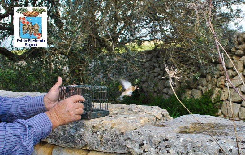 https://www.ragusanews.com//immagini_articoli/19-12-2018/cacciatori-maltesi-catturano-uccelli-ragusa-500.jpg