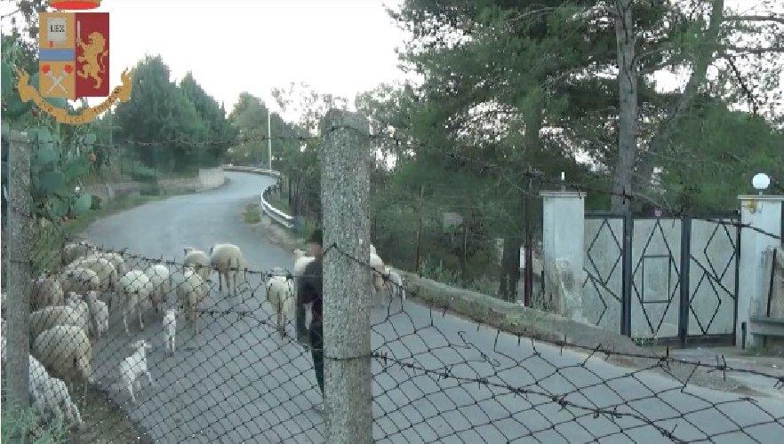 https://www.ragusanews.com//immagini_articoli/19-12-2019/pascolavano-le-pecore-invece-di-lavorare-al-comune-500.jpg