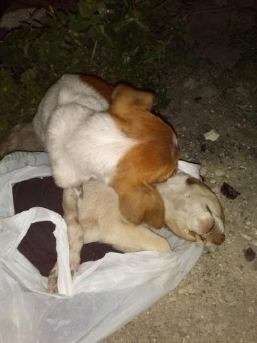 https://www.ragusanews.com//immagini_articoli/20-02-2014/i-cani-abbandonati-in-contrada-scalamarina-500.jpg