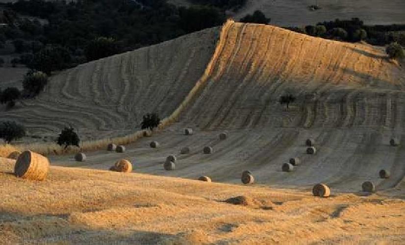 https://www.ragusanews.com//immagini_articoli/20-02-2014/paesaggio-ibleo-gli-integralismi-degli-ambientalisti-500.jpg