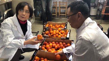 https://www.ragusanews.com//immagini_articoli/20-03-2019/sono-arrivate-cina-prime-arance-rosse-siciliane-240.jpg