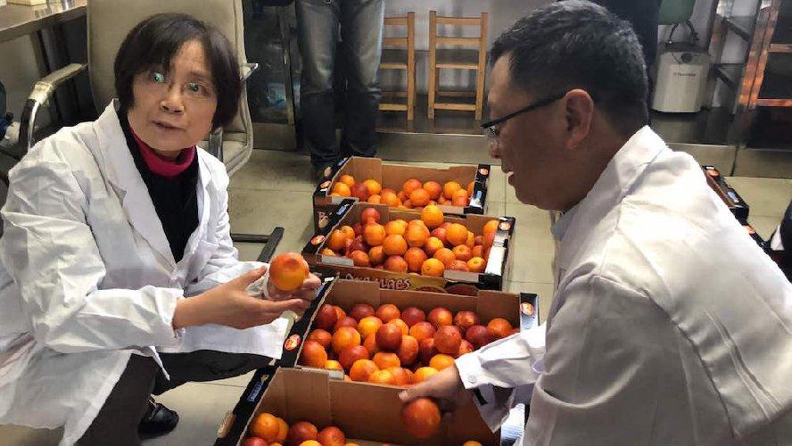 https://www.ragusanews.com//immagini_articoli/20-03-2019/sono-arrivate-cina-prime-arance-rosse-siciliane-500.jpg
