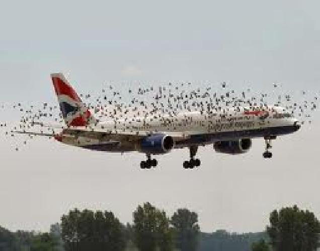 http://www.ragusanews.com//immagini_articoli/20-04-2015/stormo-impedisce-atterraggio-a-catania-anziche-comiso-volo-a-palermo-500.png