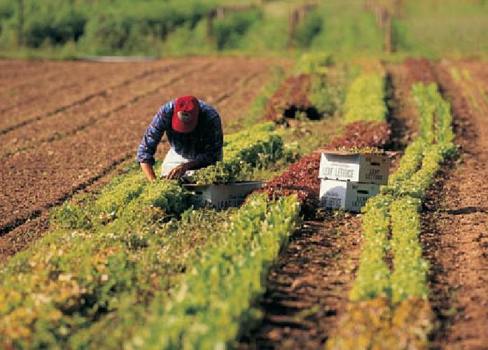 http://www.ragusanews.com//immagini_articoli/20-05-2014/congresso-uila-e-uimec-a-ragusa-no-al-lavoro-nero-in-agricoltura-500.jpg