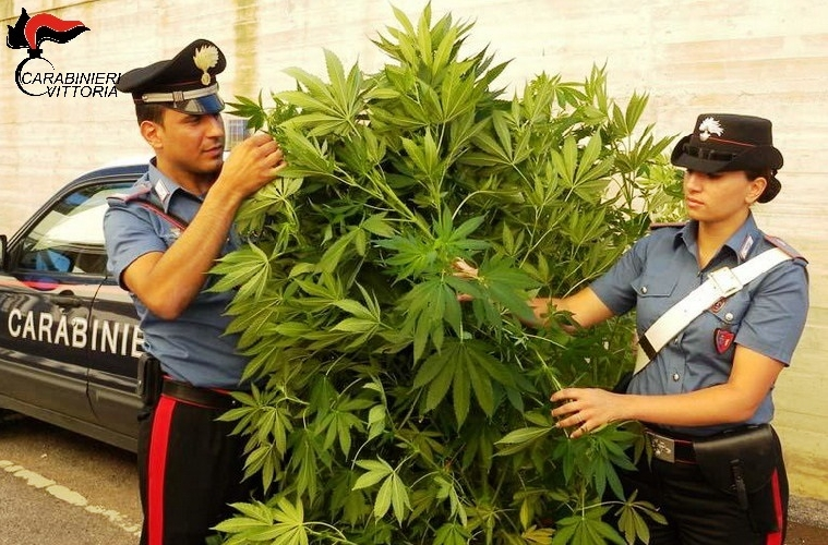 http://www.ragusanews.com//immagini_articoli/20-06-2017/chiaramonte-pensionato-coltiva-marijuana-nellorto-arrestato-500.jpg