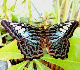https://www.ragusanews.com//immagini_articoli/20-06-2018/fino-luglio-prorogata-casa-farfalle-ortigia-240.jpg