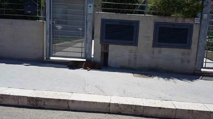 https://www.ragusanews.com//immagini_articoli/20-07-2018/cani-pieni-zecche-stazionano-giorni-salvatore-occhipinti-500.jpg