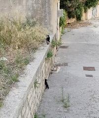https://www.ragusanews.com//immagini_articoli/20-07-2018/milione-visualizzazioni-gattini-cercano-mamma-240.png