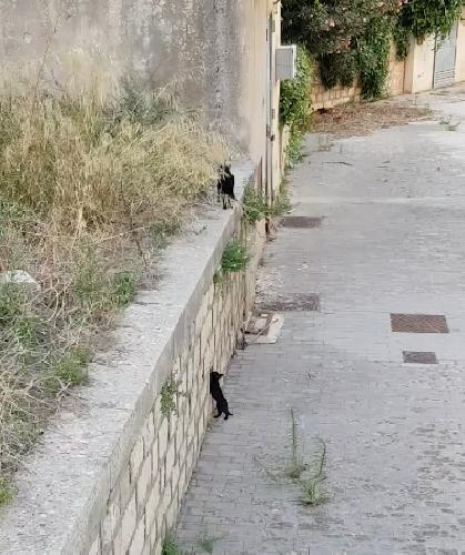 https://www.ragusanews.com//immagini_articoli/20-07-2018/milione-visualizzazioni-gattini-cercano-mamma-500.png