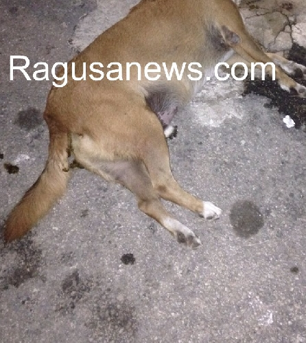 http://www.ragusanews.com//immagini_articoli/20-08-2015/e--morto-il-cane-ettore-fratello-di-italo-500.jpg