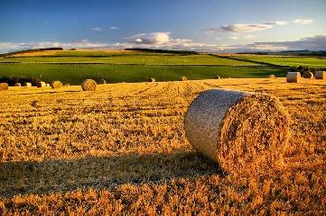 http://www.ragusanews.com//immagini_articoli/20-10-2017/gentile-guardiamo-smartagrifood-sviluppo-dellagricoltura-240.jpg