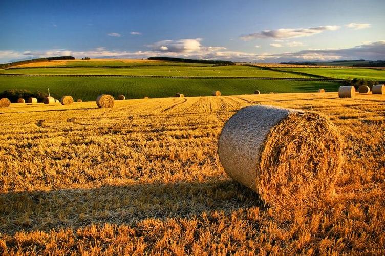 http://www.ragusanews.com//immagini_articoli/20-10-2017/gentile-guardiamo-smartagrifood-sviluppo-dellagricoltura-500.jpg