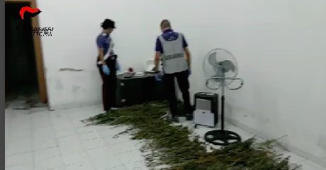 https://www.ragusanews.com//immagini_articoli/20-10-2018/ambulante-comiso-cinque-chili-droga-casa-240.jpg