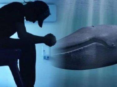 https://www.ragusanews.com//immagini_articoli/20-10-2020/sicilia-ragazzo-pronto-a-lanciarsi-nel-vuoto-e-il-blue-whale-280.jpg