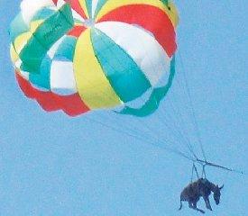 https://www.ragusanews.com//immagini_articoli/20-11-2019/pensavo-che-fosse-icaro-invece-era-un-calesse-240.jpg