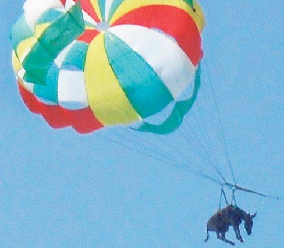 https://www.ragusanews.com//immagini_articoli/20-11-2019/pensavo-che-fosse-icaro-invece-era-un-calesse-500.jpg