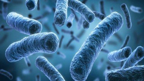 https://www.ragusanews.com//immagini_articoli/20-11-2020/nel-2050-i-super-batteri-saranno-la-prima-causa-di-morte-280.jpg