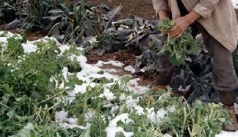 http://www.ragusanews.com//immagini_articoli/21-01-2017/agricoltura-gelate-sindaci-chiedono-aiuto-200.jpg