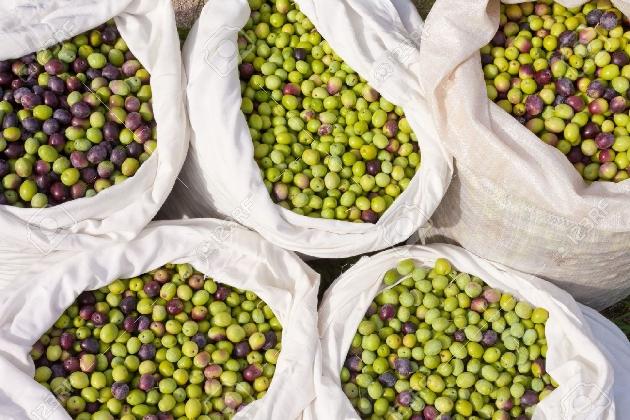 http://www.ragusanews.com//immagini_articoli/21-02-2017/olio-oliva-turco-arrivo-anche-italia-420.jpg