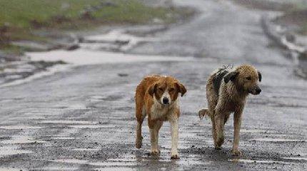 https://www.ragusanews.com//immagini_articoli/21-02-2018/cani-randagi-trovati-impiccati-pressi-rosolini-240.jpg
