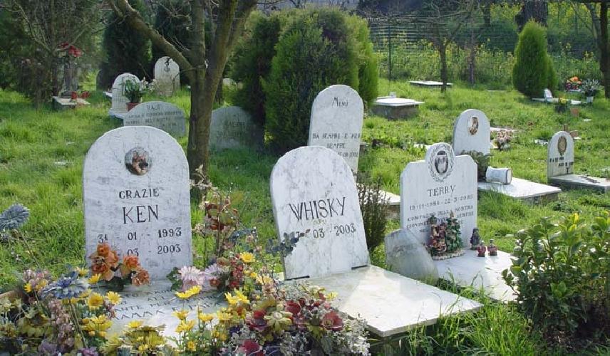 https://www.ragusanews.com//immagini_articoli/21-03-2017/grillini-fanno-cimitero-animali-500.jpg