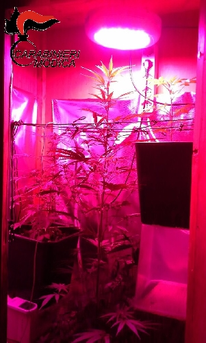 http://www.ragusanews.com//immagini_articoli/21-06-2017/serra-marijuana-casa-arrestato-incensurato-scicli-500.jpg