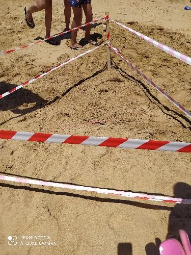 https://www.ragusanews.com//immagini_articoli/21-06-2020/le-tartarughe-hanno-deposto-le-uova-a-donnalucata-foto-500.jpg