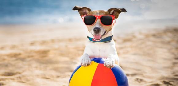 https://www.ragusanews.com//immagini_articoli/21-06-2021/cani-in-spiaggia-a-marina-di-ragusa-ecco-dove-280.jpg