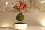 http://www.ragusanews.com//immagini_articoli/21-07-2016/il-bonsai-fluttuante-100.jpg