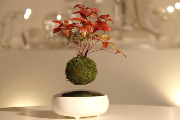 http://www.ragusanews.com//immagini_articoli/21-07-2016/il-bonsai-fluttuante-420.jpg