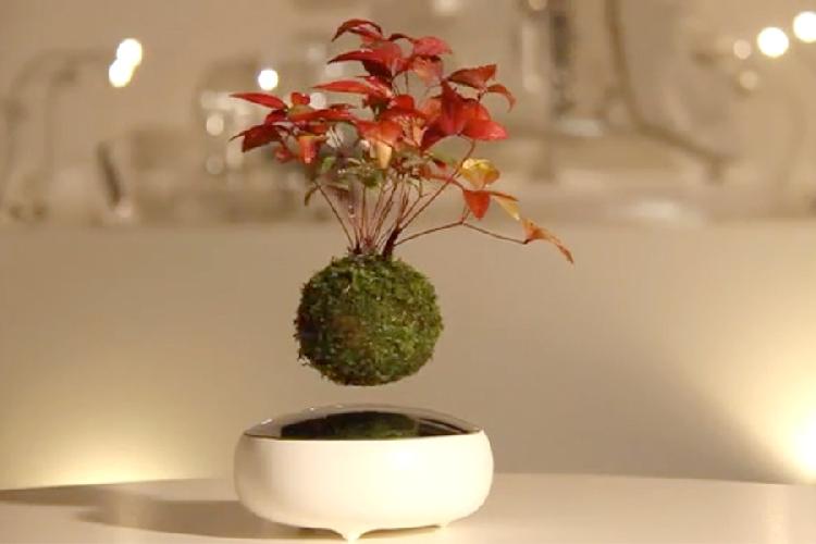 http://www.ragusanews.com//immagini_articoli/21-07-2016/il-bonsai-fluttuante-500.jpg