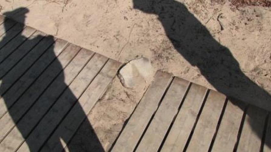 https://www.ragusanews.com//immagini_articoli/21-09-2014/randello-punto-e-accapo-500.jpg