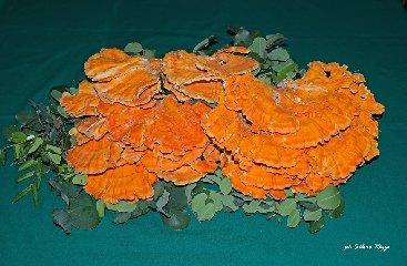 https://www.ragusanews.com//immagini_articoli/21-09-2019/1569048359-vincenzo-e-il-suo-fungo-di-carrubo-di-sei-chili-foto-1-240.jpg
