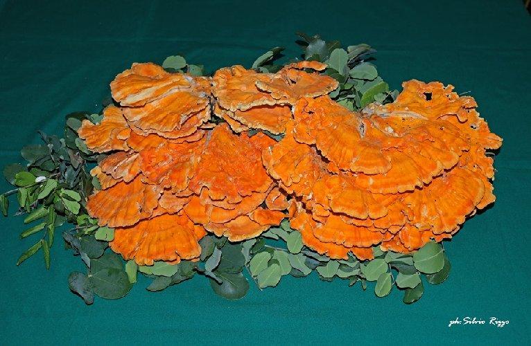 https://www.ragusanews.com//immagini_articoli/21-09-2019/1569048359-vincenzo-e-il-suo-fungo-di-carrubo-di-sei-chili-foto-1-500.jpg