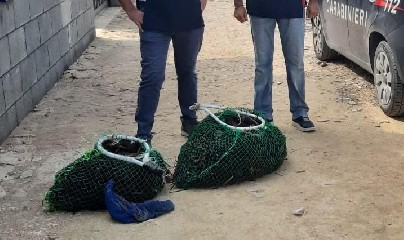 https://www.ragusanews.com//immagini_articoli/21-09-2020/mille-ricci-di-mare-pescati-illegalmente-240.jpg