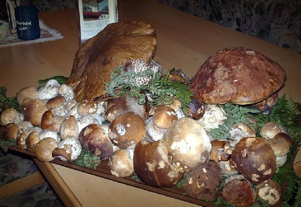 https://www.ragusanews.com//immagini_articoli/21-10-2016/funghi-fest-a-castelbuono-420.jpg