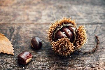 https://www.ragusanews.com//immagini_articoli/21-10-2019/posso-mangiare-le-castagne-se-ho-la-glicemia-alta-240.jpg