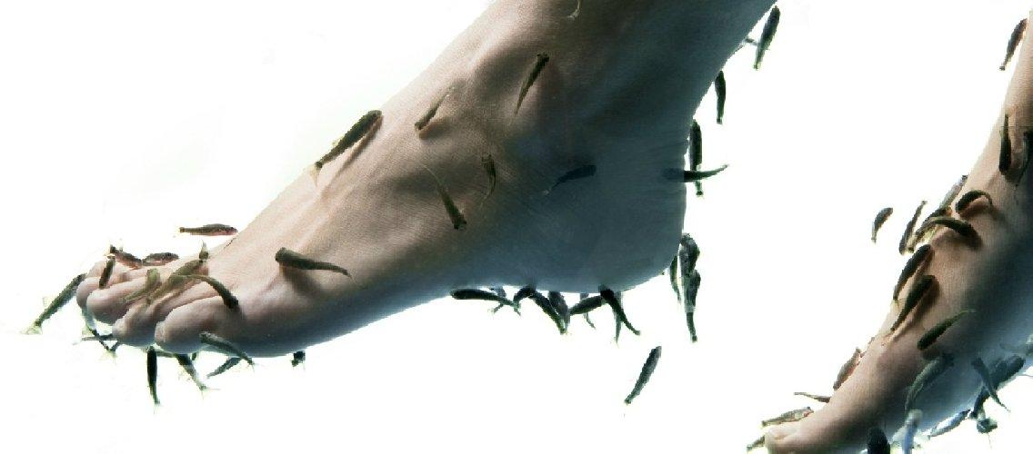 https://www.ragusanews.com//immagini_articoli/22-01-2013/frontiera-benessere-modica-wonderfish-500.jpg