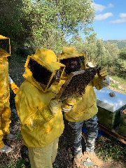 https://www.ragusanews.com//immagini_articoli/22-01-2020/apicoltura-urbana-a-ragusa-240.jpg
