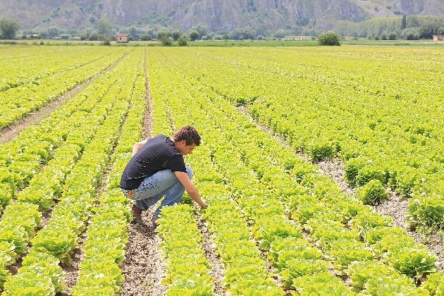 http://www.ragusanews.com//immagini_articoli/22-02-2017/agricoltura-giovane-italia-420.jpg