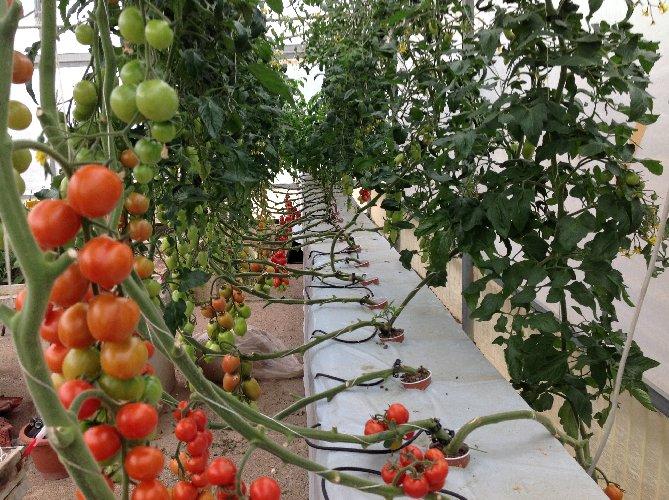 https://www.ragusanews.com//immagini_articoli/22-02-2019/scicli-sperimenta-futuro-serricoltura-alto-reddito-500.jpg