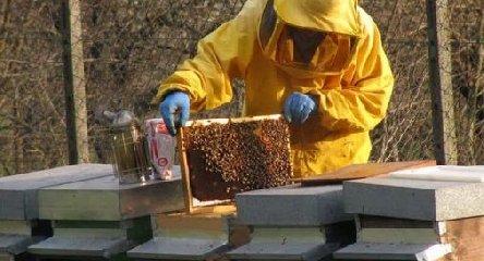 https://www.ragusanews.com//immagini_articoli/22-03-2019/ladro-api-240.jpg