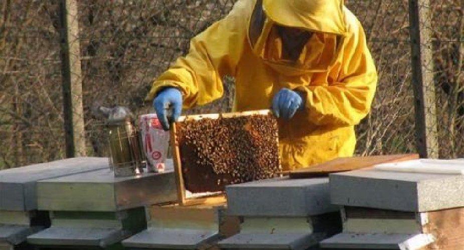 https://www.ragusanews.com//immagini_articoli/22-03-2019/ladro-api-500.jpg