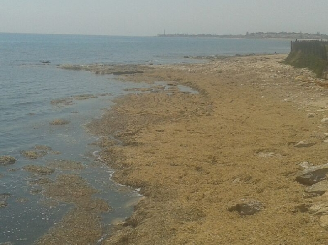 https://www.ragusanews.com//immagini_articoli/22-06-2014/punta-di-mola-spiaggia-impraticabile-500.jpg