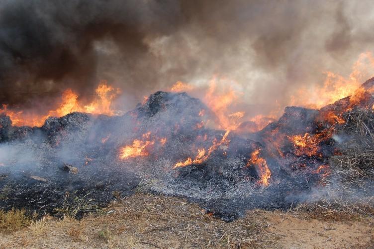 https://www.ragusanews.com//immagini_articoli/22-06-2020/fumarole-denunciati-alla-procura-4-produttori-agricoli-500.jpg