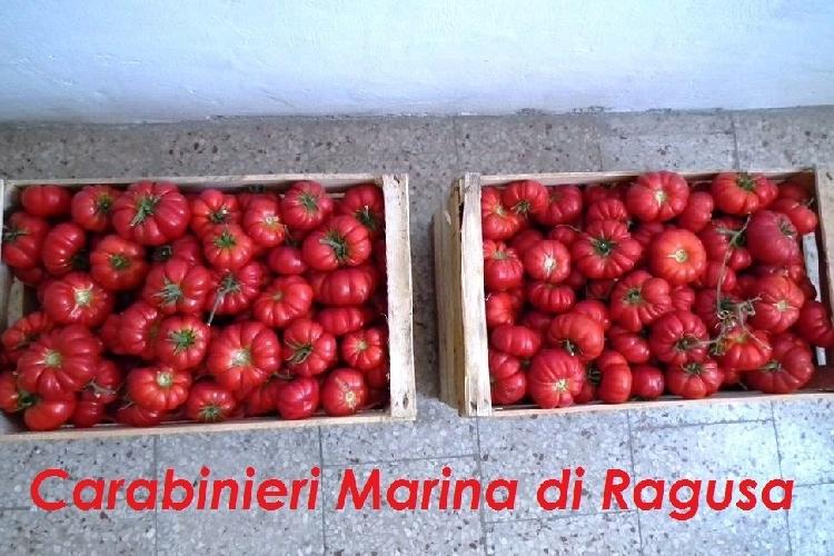 https://www.ragusanews.com//immagini_articoli/22-07-2014/compra-i-pomodori-ma-gli-euro-sono-falsi-500.jpg