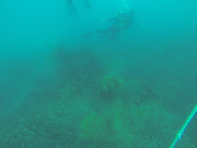 http://www.ragusanews.com//immagini_articoli/22-07-2014/trovata-unancora-ammiraglia-nel-mare-di-montalbano-500.jpg