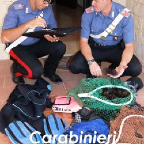 http://www.ragusanews.com//immagini_articoli/22-08-2015/ricci-illegali-pescatori-siracusani-fermati-dai-carabinieri-di-marina-500.jpg